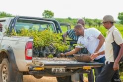 Ghana Memory Tree project