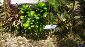 Indonesia planting 4